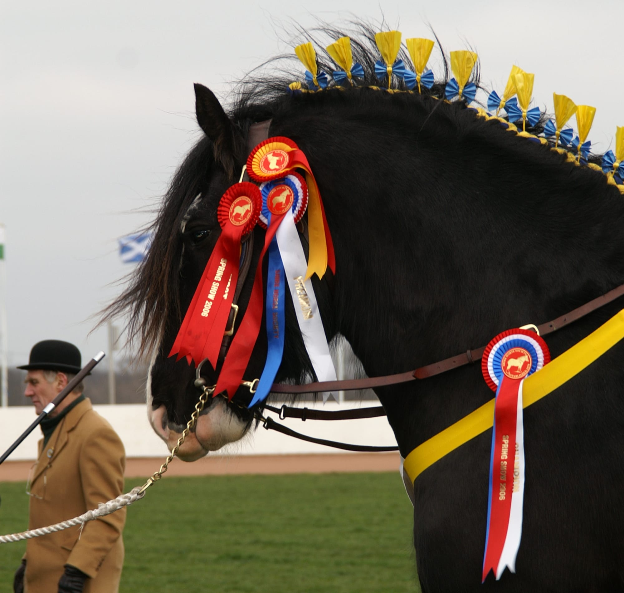 The Biggest and Most Beautiful Horses in the World